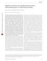 Adaptive evolution of a duplicated pancreatic ribonuclease gene in a leafeating monkey
