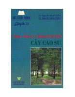 Ebook bác sĩ cây trồng   quyển 23  trồng chăm sóc và phòng trừ sâu bệnh cây cao su (phần 1)