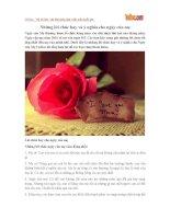 Những lời chúc hay và ý nghĩa cho Ngày của Mẹ