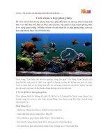 Cách chọn cá hợp phong thủy