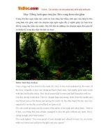 Học Tiếng Anh qua truyện: Dẻo cong hơn rắn giòn