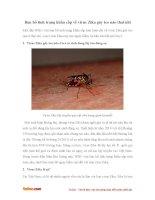 Ban bố tình trạng khẩn cấp về virus Zika gây teo não thai nhi