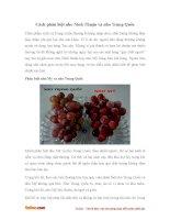 Cách phân biệt nho Ninh Thuận và nho Trung Quốc