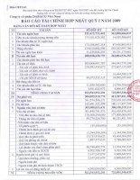 Báo cáo tài chính quý 1 năm 2009 - Công ty Cổ phần Tập đoàn Dabaco Việt Nam