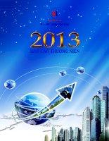 Báo cáo thường niên năm 2013 - Công ty Cổ phần Xuất nhập khẩu Y tế Domesco