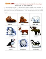 Flashcards for Kids: Animals