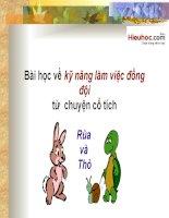 Bài học về kỹ năng làm việc đồng đội câu chuyện của thỏ và rùa