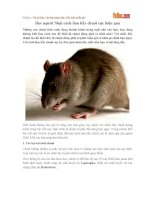 Học người Nhật cách làm bẫy chuột cực hiệu quả