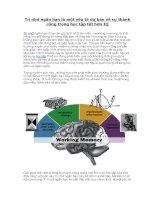 Trí nhớ ngắn hạn là một yếu tố dự báo về sự thành công trong học tập tốt hơn IQ