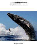 Marine fisheries review , tập 72, số 03, 2010