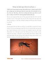 Những căn bệnh nguy hiểm do muỗi gây ra