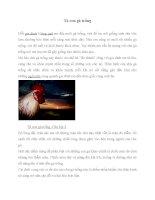 Bài văn Tả con gà trống