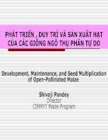Bài thuyết trình phát triển, duy trì và sản xuất hạt của các giống ngô thụ phấn tự do