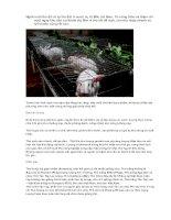 phương pháp chăn nuôi thỏ