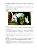 phương pháp chăn nuôi thỏ part 2