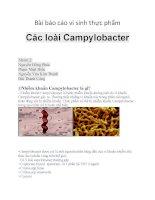 Bài báo cáo vi sinh thực phẩm