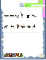 30877 wild animals