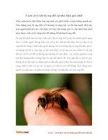 Cách xử lý khi bị ong đốt tại nhà hiệu quả nhất