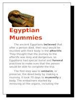 7730 egyptian mummy