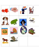 1711 pets playing cards