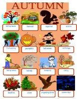 25950 autumn pictionary
