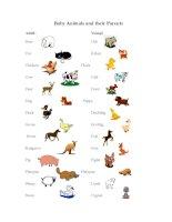 49633 baby animals