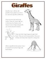 1696 giraffes
