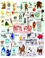 49543 animals  poster