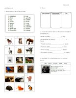 25044 animals