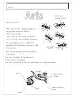 2131 ants