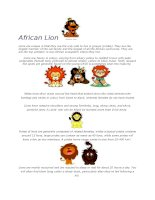 361 african lion