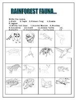 944 rainforest animals