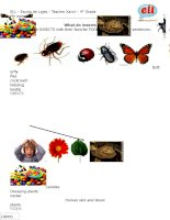 28708 what do insects eat