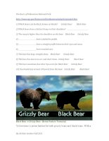 12876 bears of yellowstone park