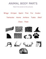 19125 animals body parts