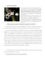 Tác dụng của mật ong manuka watson and son