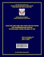 Khảo sát điều kiện sinh tổng hợp pectinase của hanseniaspora uvarum và ứng dụng trong lên men cà phê