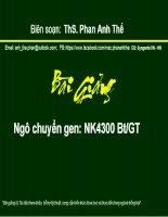 ThS. Phan Anh Thế: Bài giảng ngô biến đổi gen NK4300 BtGT
