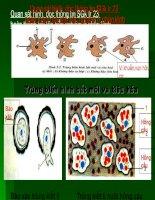 Bài giảng sinh học 7 bài trùng kết lị và trùng sốt rét (17)
