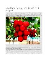 Giới thiệu nho ruby roman nhật bản đắt nhất thế giới