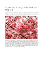 Giới thiệu sự tích đau thương của hoa anh đào nhật bản