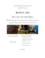 DE TAI CAP TRUONG SINH VIEN 2015 CA CHACH BUN hoàn chỉnh