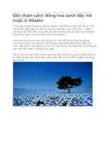 Du lịch nhật bản đến thăm cánh đồng hoa xanh đầy mê hoặc ở hitashi