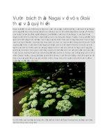 Du lịch nhật bản vườn bách thảo nagai với vô số loài thực vật quý hiếm