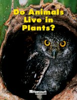 Do animals live in plants