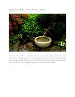8 yếu tố của một khu vườn truyền thống nhật bản