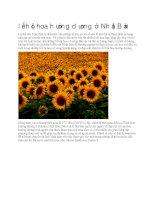 Giới thiệu nhật bản lễ hội hoa hướng dương ở nhật bản
