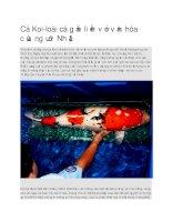 Giới thiệu loài cá gắn liền với văn hóa của người nhật