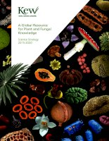 Kew science strategy 2015 2020 single pages