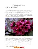 Thuyết minh về cây hoa đào bài văn mẫu thuyết minh lớp 9